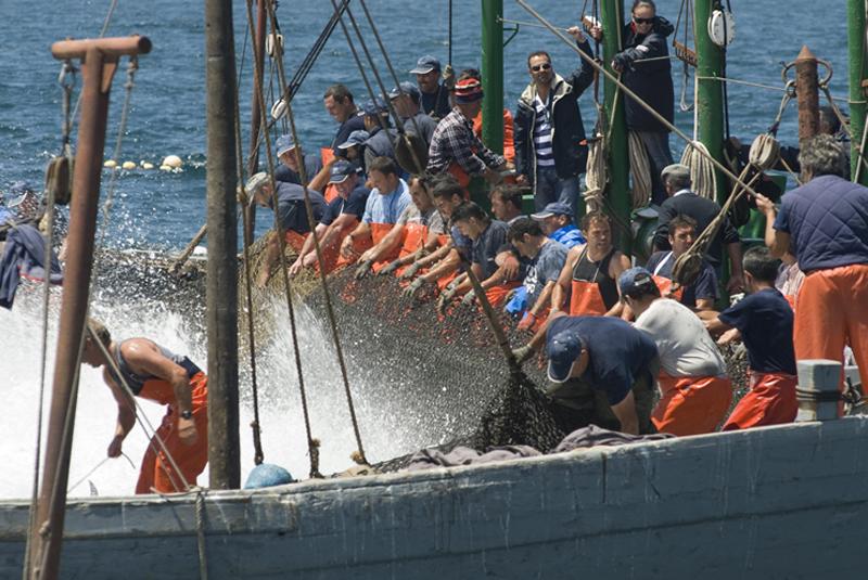 Pesca de Almadraba, TOÑI FLORES CEBRIÁN