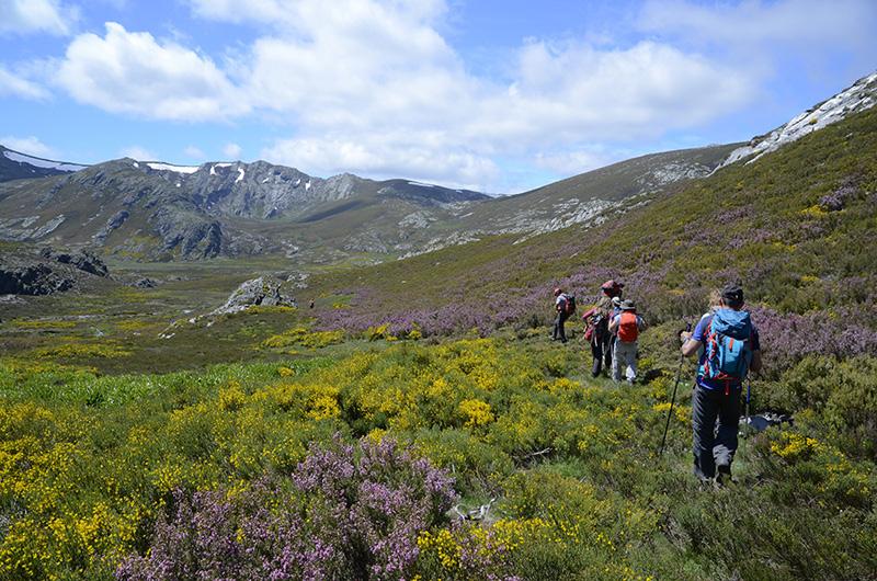 Floración, Alta Sanabria, Sierra de la Cabrera, León