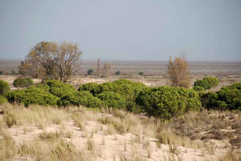 La Marisma desde las dunas de Doñana