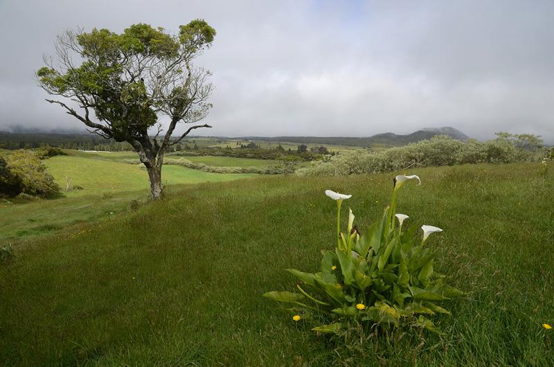 Plaine de Cafres, Isla de la Reunión