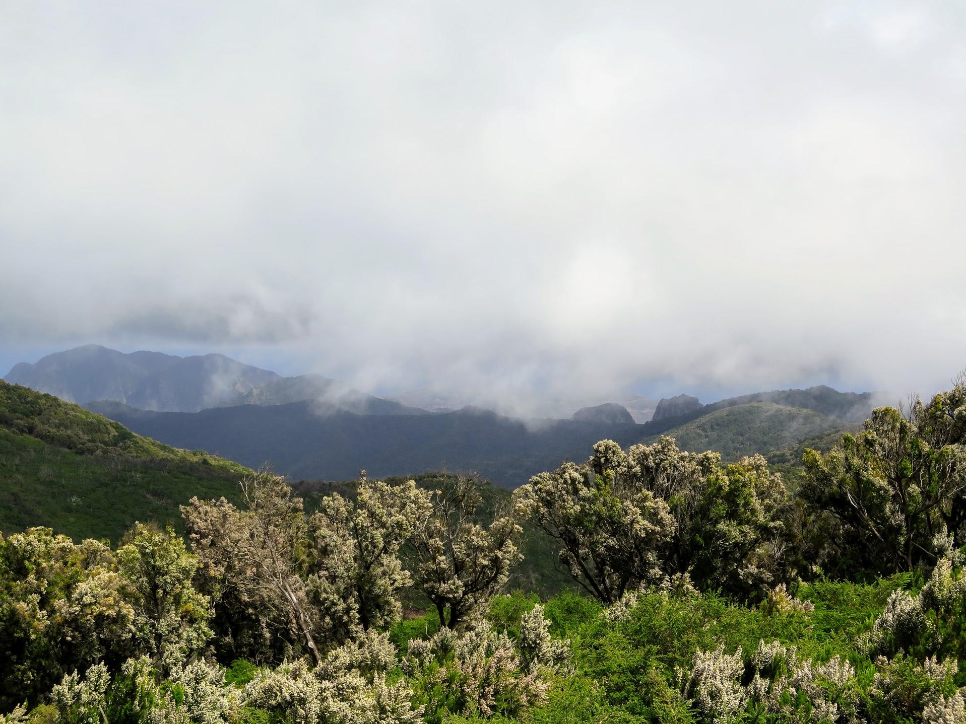 Parque Natural de Garajonay, La Gomera