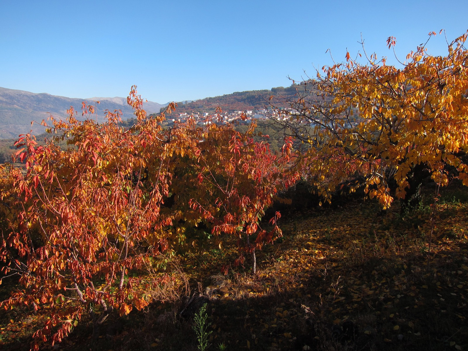 Valle del Jerte, Cáceres