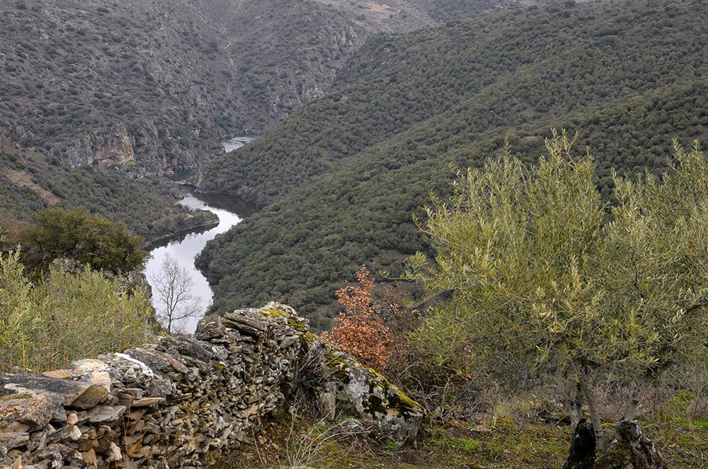 Uces, Los Arribes del Duero, Salamanca