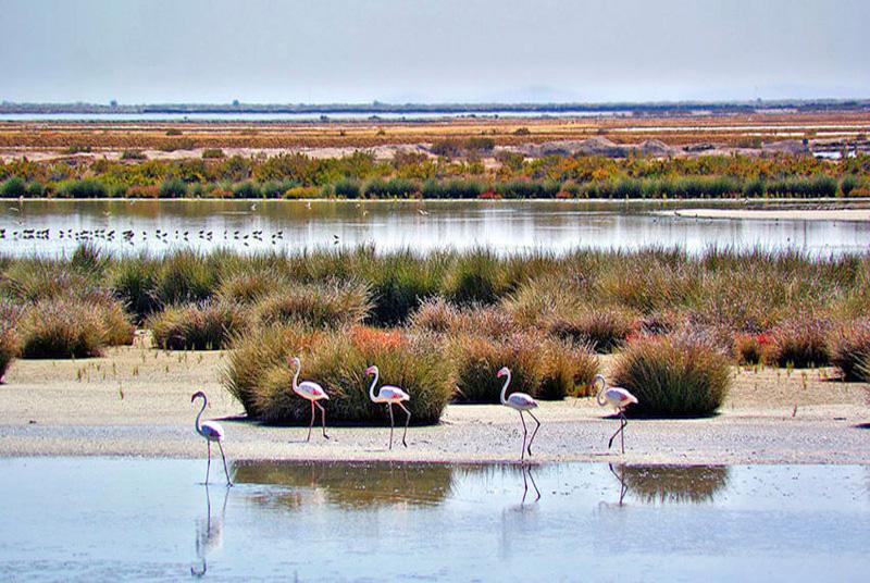 Las Marismas del Rocío-Doñana-Huelva