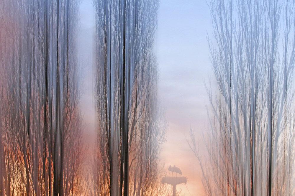 CAMPOS DE CASTILLA - JOSÉ LUIS RODRÍGUEZ SÁNCHEZ (ESPAÑA) - Mención de Honor: Foto Creativa - Abstracta