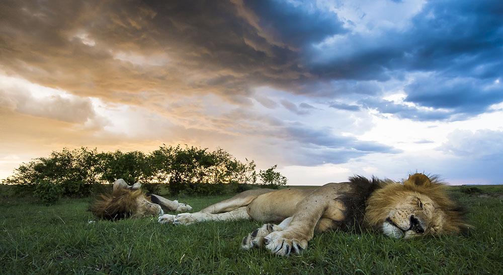 SLEEPING KINGS - ARNFINN JOHANSEN (NORUEGA) - Mención de Honor: Mundo Animal