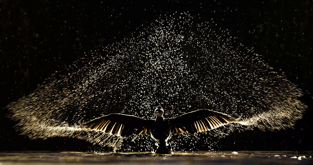 SHOWTIME - BENCE MATE (HUNGRÍA) - Mención de Honor: Mundo de las Aves