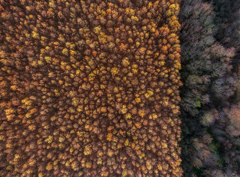 TWO FORESTS - CSABA DARÓCZI (HUNGRÍA) - Mención de Honor: Mundo Vegetal