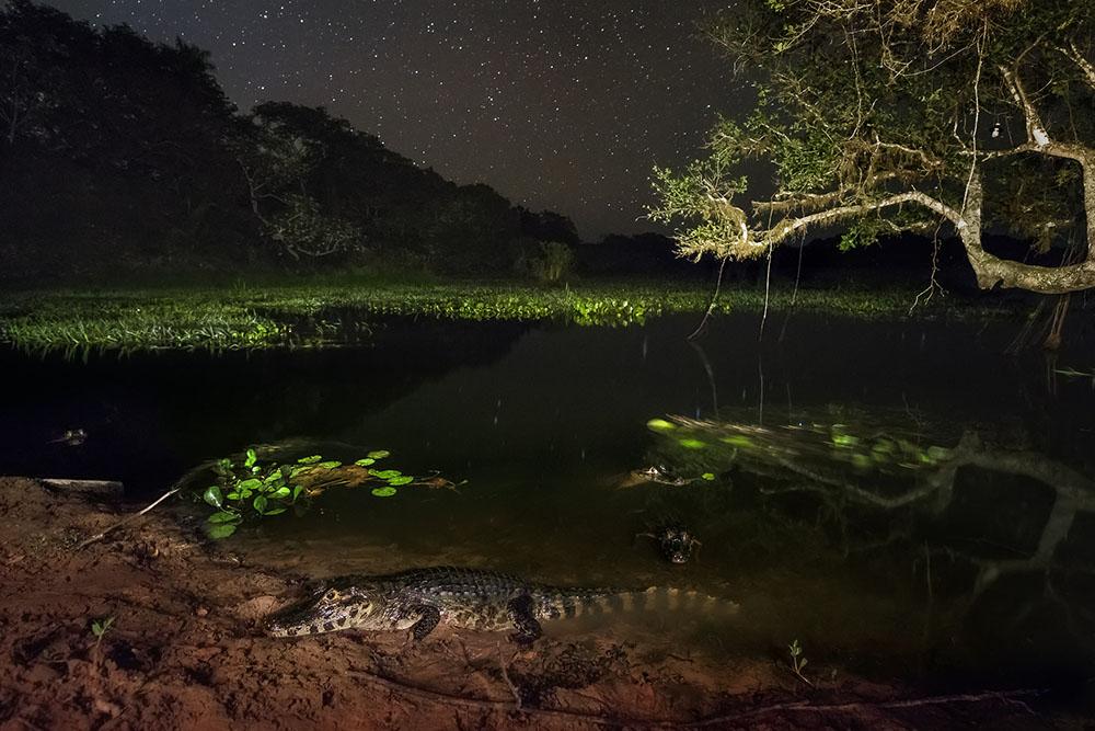 CAYMAN - MARCIO CABRAL (BRASIL) - Mención de Honor: Biodiversidad