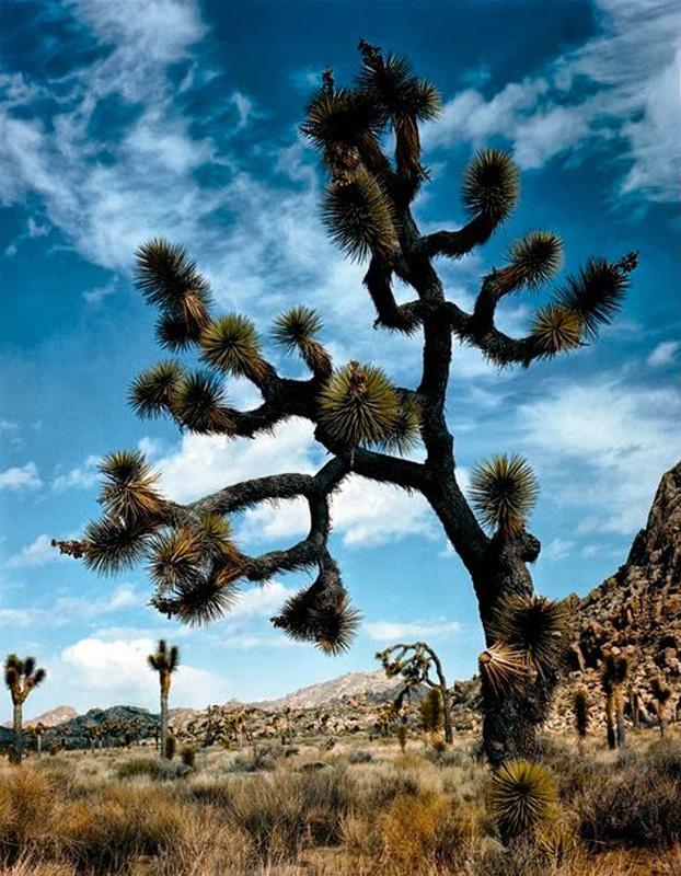 Parque Nacional de Joshua Tree. California