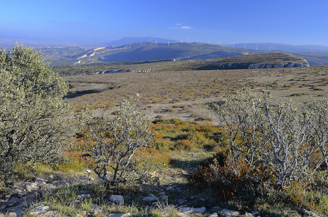 Meseta superior del Cerro de la Muela-Burgos