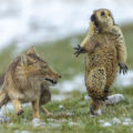 Ganadora-Wildlife-Photographer-the-Year_EDIIMA2019