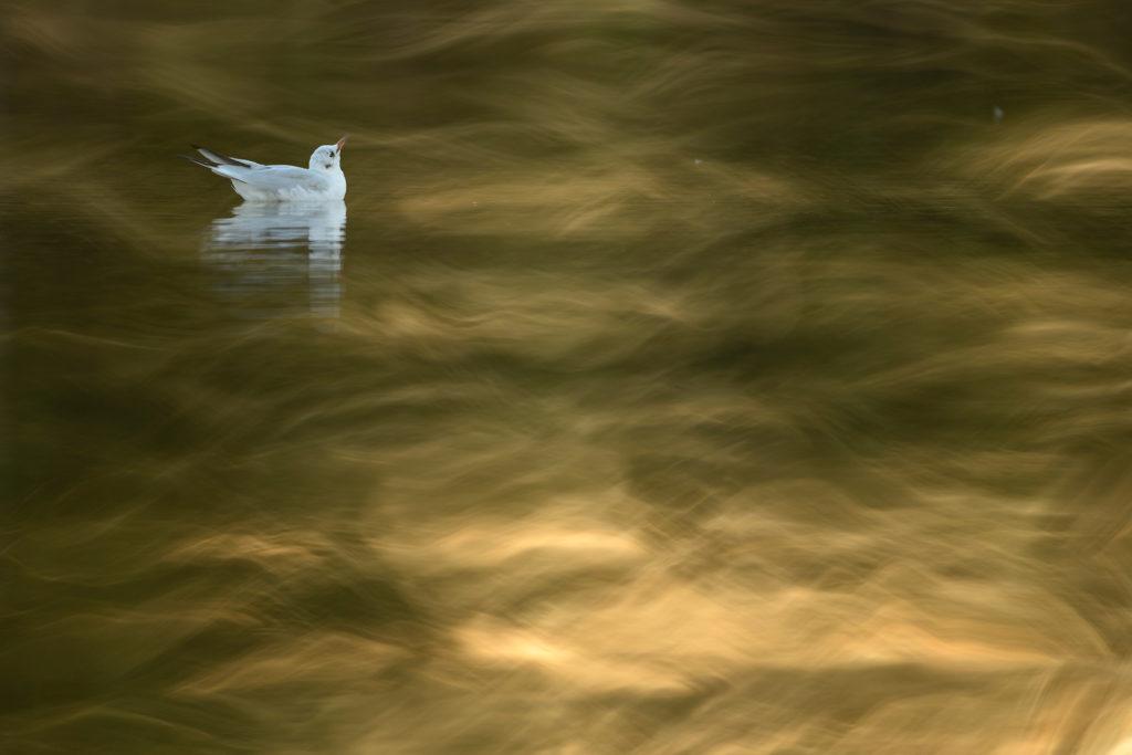 Entre OlasImaginarias-Jose Manuel Grandio-Mencion C4-Vision artistica de las aves