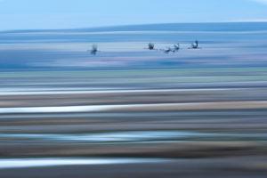 Grullas Sobre Gallocanta-Carlos Perez Naval-Mencion C5-Jovenes fotografos