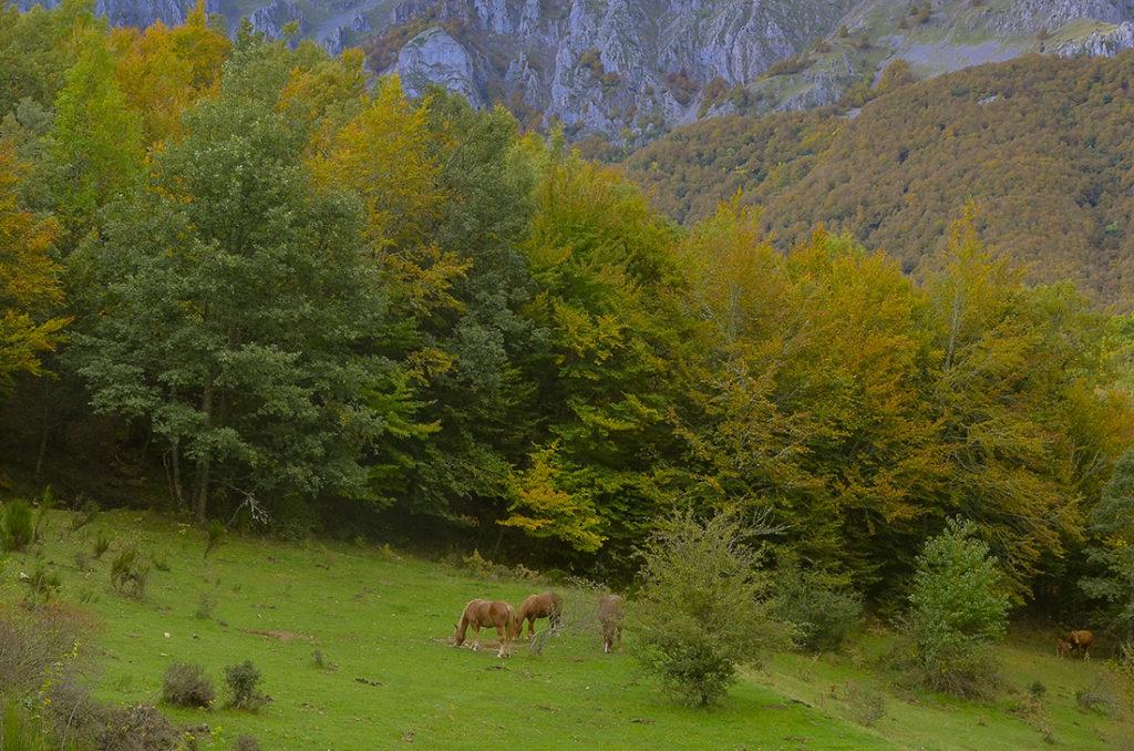 Caballos hispano-bretones-León